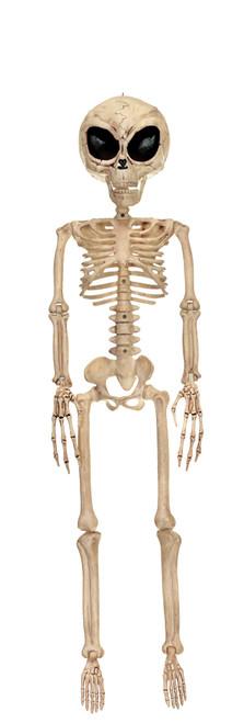 Alien Skeleton Bone Color 37 in