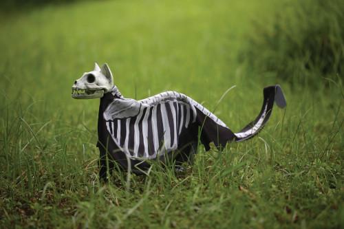 Cat Lawn Stake