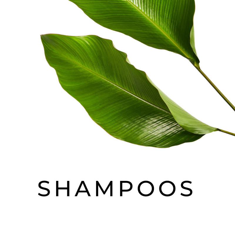 shampoos1.png