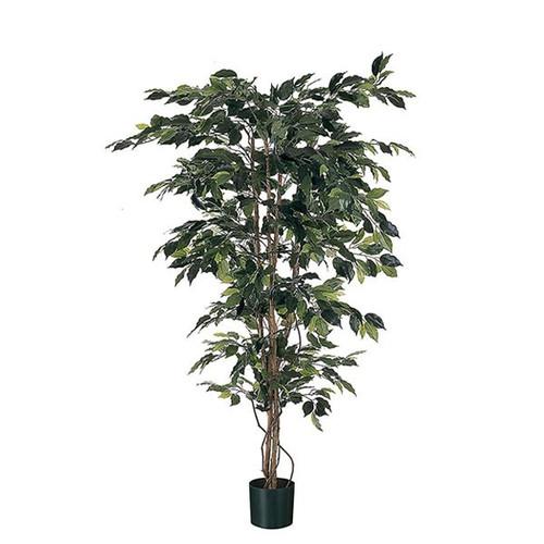 5 foot Artificial Ficus 171cm, Green