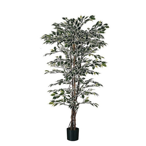Artificial Ficus 200cm (6ft), x1248 Tips, Variegated