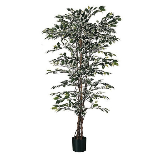 Artificial Ficus 235cm (7ft), x1488 Tips, Variegated