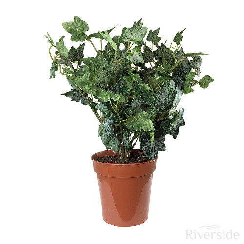 Artificial Small Potted German Ivy, Green