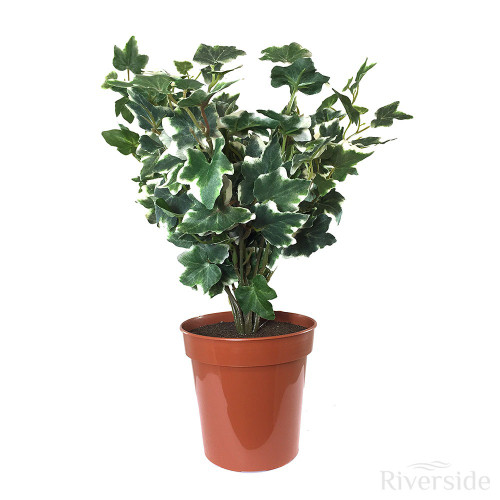 Artificial Small Potted German Ivy, Variegated