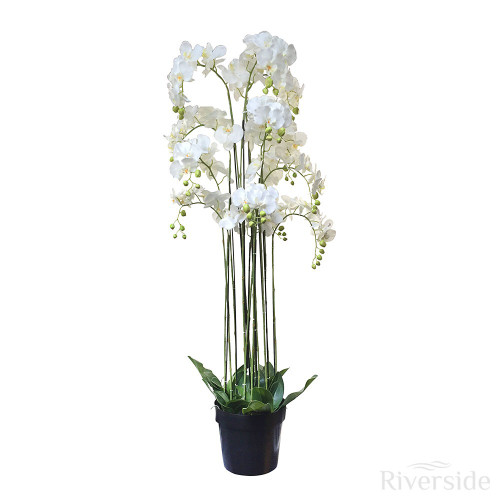 Artificial Potted Multi Stem Orchid 152cm, Cream