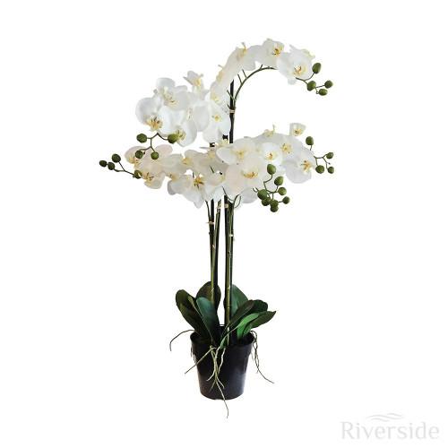 Artificial Orchid In Pot 90cm, Cream
