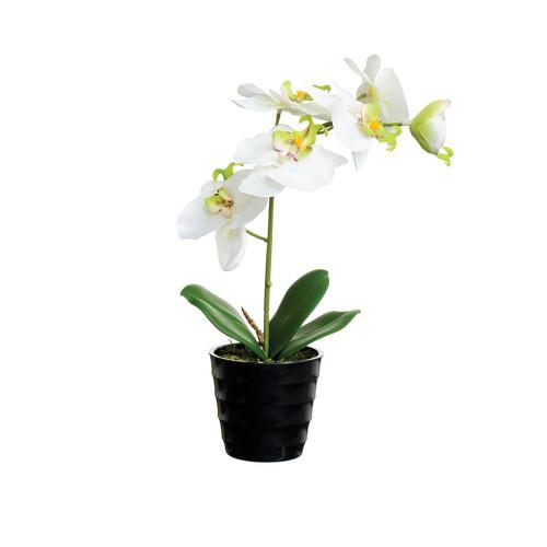 Artificial 27cm Orchid in Black Pot, Cream