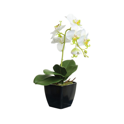 Artificial 38cm Orchid in Black Pot, Cream