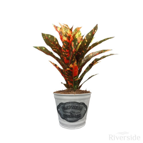 Artificial Small Foliage Plant - Flowers & Garden White Tin Pot, Variegated Green And Orange 23cm