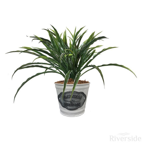 Artificial Small Foliage Plant - Flowers & Garden White Tin Pot, Variegated Grass Green And White 23cm