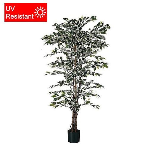 UV Resistant Artificial Ficus 92cm (3ft), Variegated