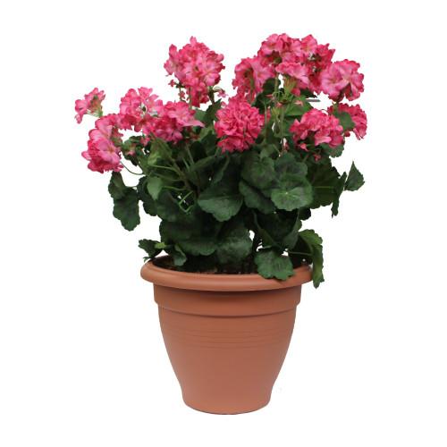 Artificial Geranium Tub -  Pink
