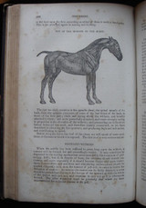 HISTORY, TREATMENT, AND DISEASES OF THE HORSE - 1853