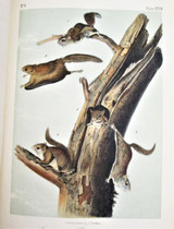 QUADRUPEDS OF NORTH AMERICA V1,  by Audubon and Bachman - 1849
