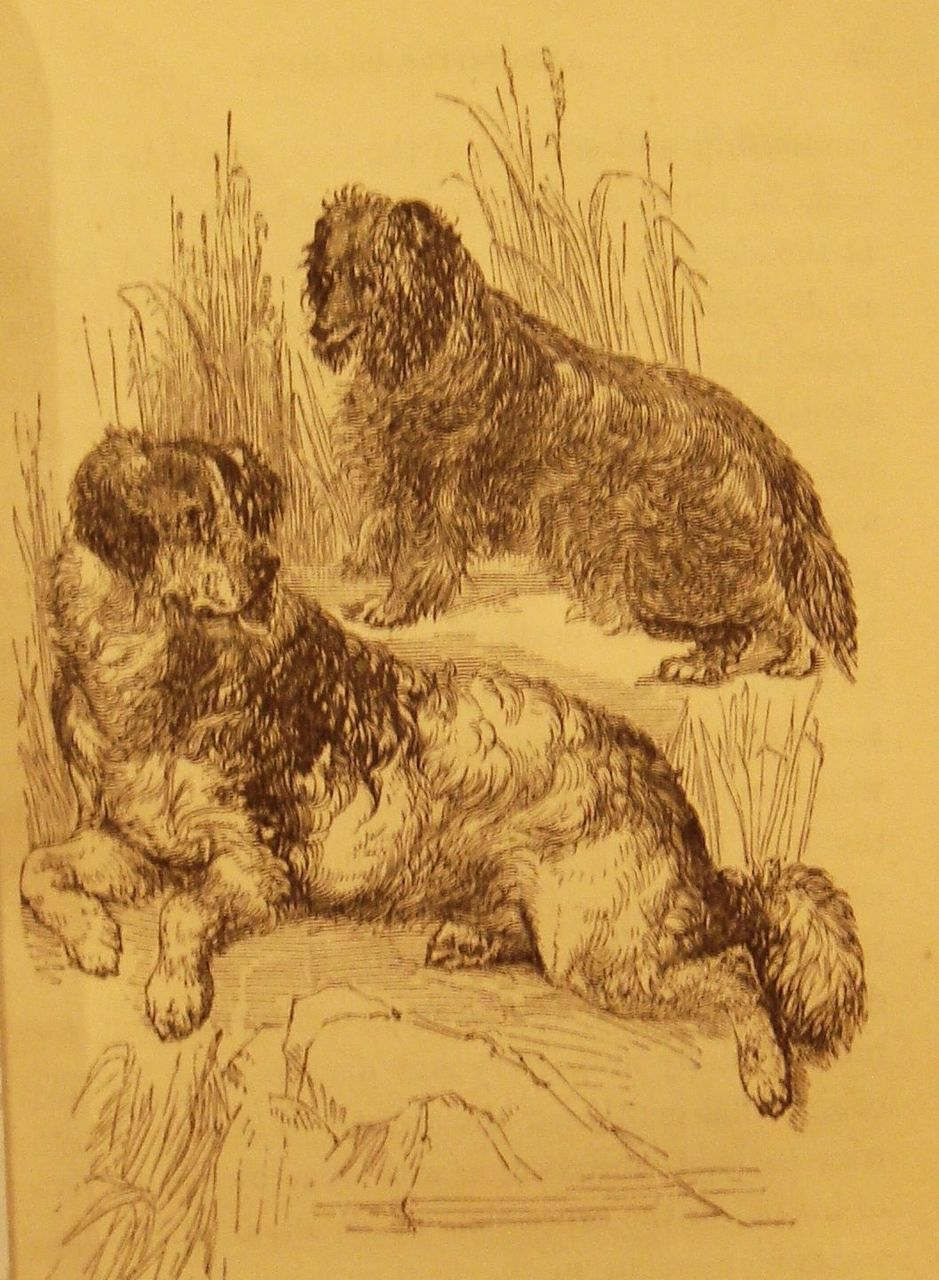 ANECDOTES OF DOGS, by Edward Jesse - 1858