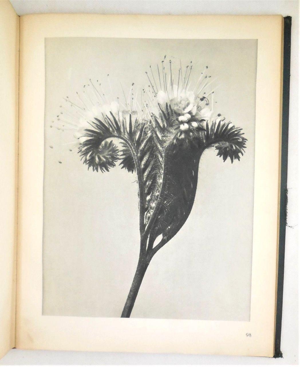 URFORMEN DER KUNST, by Karl Blossfeldt - c.1928