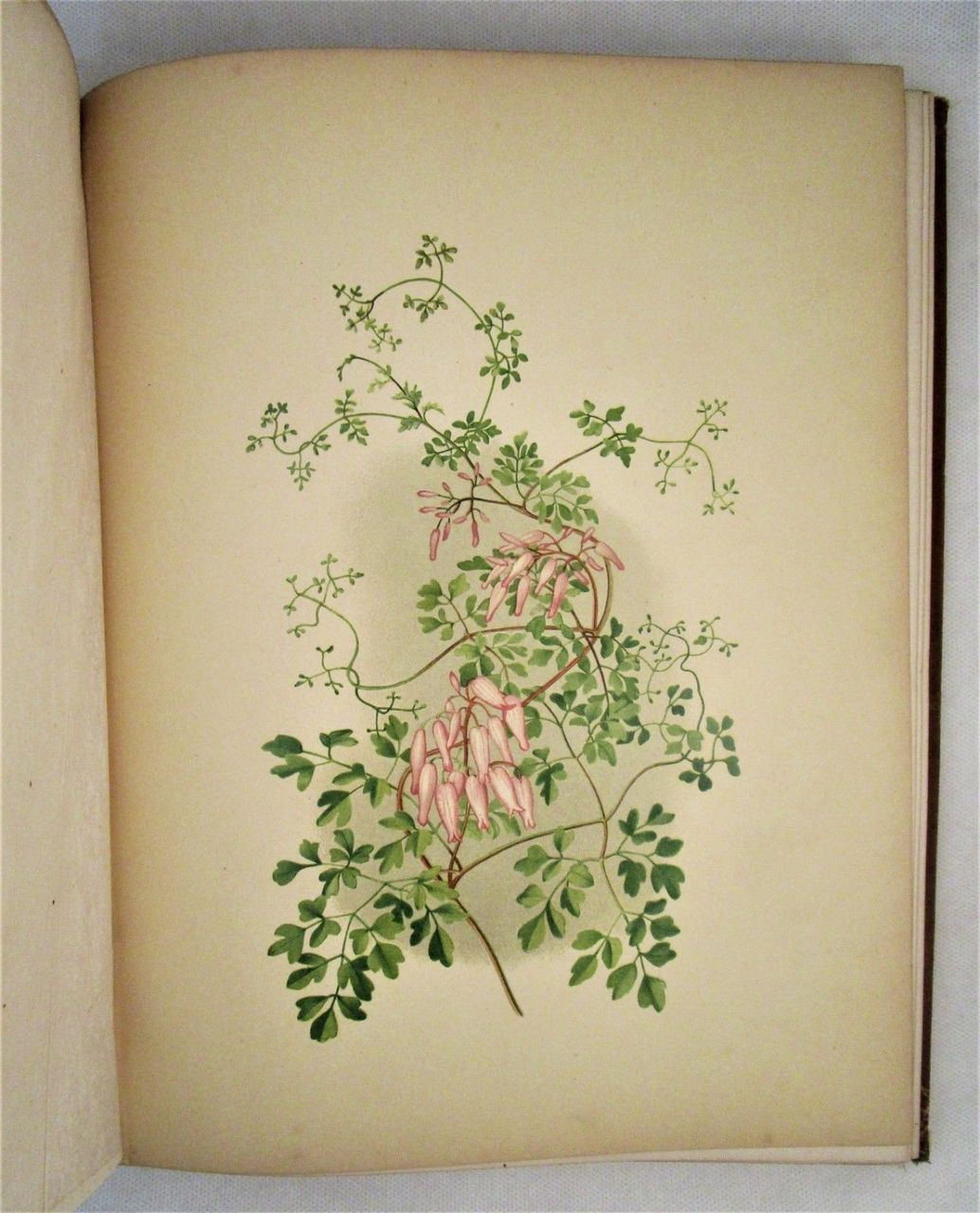 BEAUTIFUL WILDFLOWERS OF AMERICA, FROM ORIGINAL WATER-COLOR DRAWINGS AFTER NATURE, by Isaac Sprague & AB Hervey  - 1882
