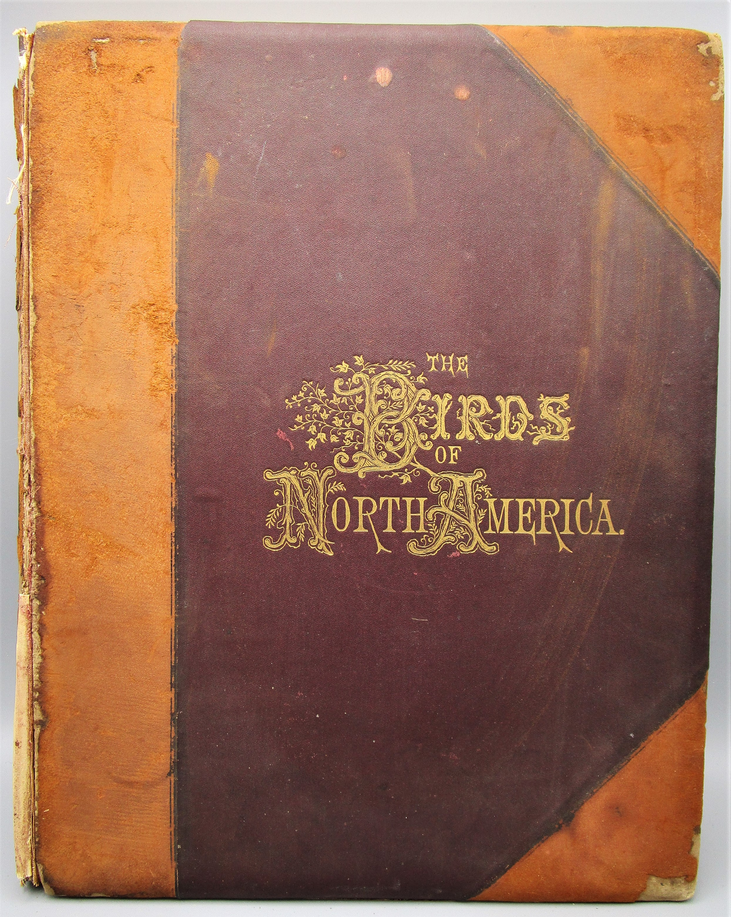 THE BIRDS OF NORTH AMERICA, by Jacob H. Studer - 1897