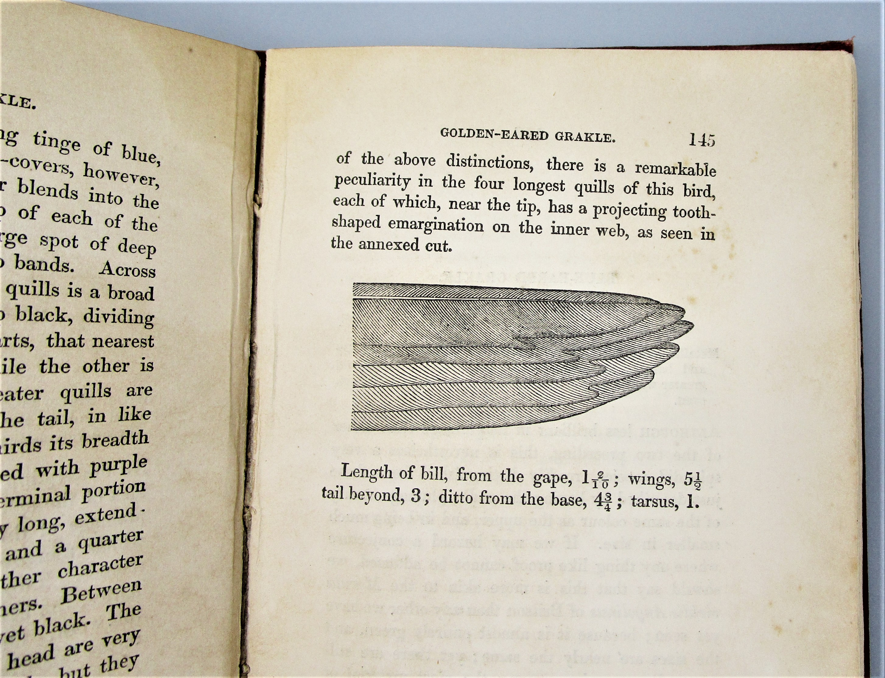 ORNITHOLOGY, BIRDS OF WESTERN AFRICA, Part I, by  Wm Jardine - 1862 [Vol XI]