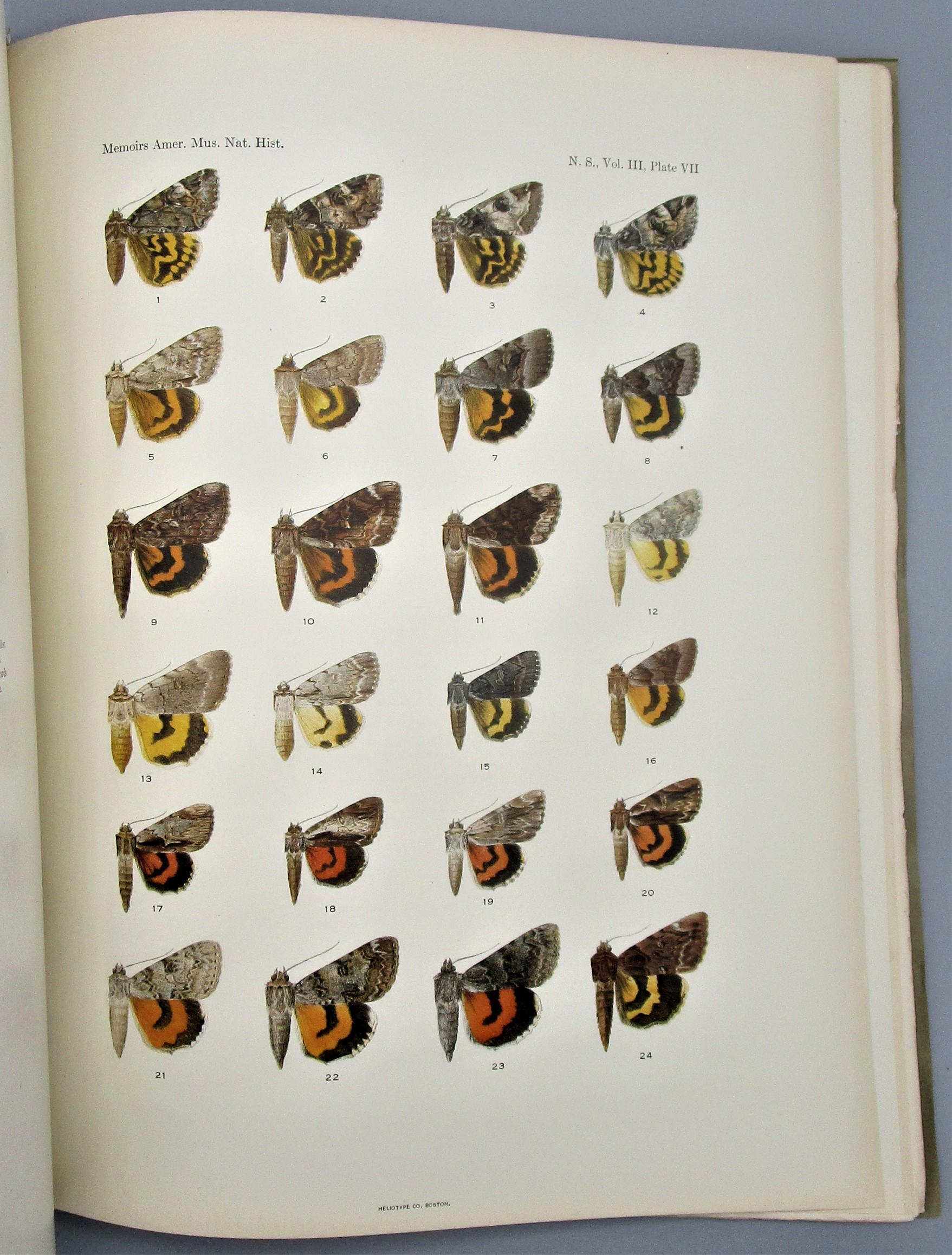 ILLUSTRATIONS OF THE NORTH AMERICAN SPECIES OF THE GENUS CATOCALA, by Barnes & McDunnough - 1918 [v.3;pt.1: Butterflies]