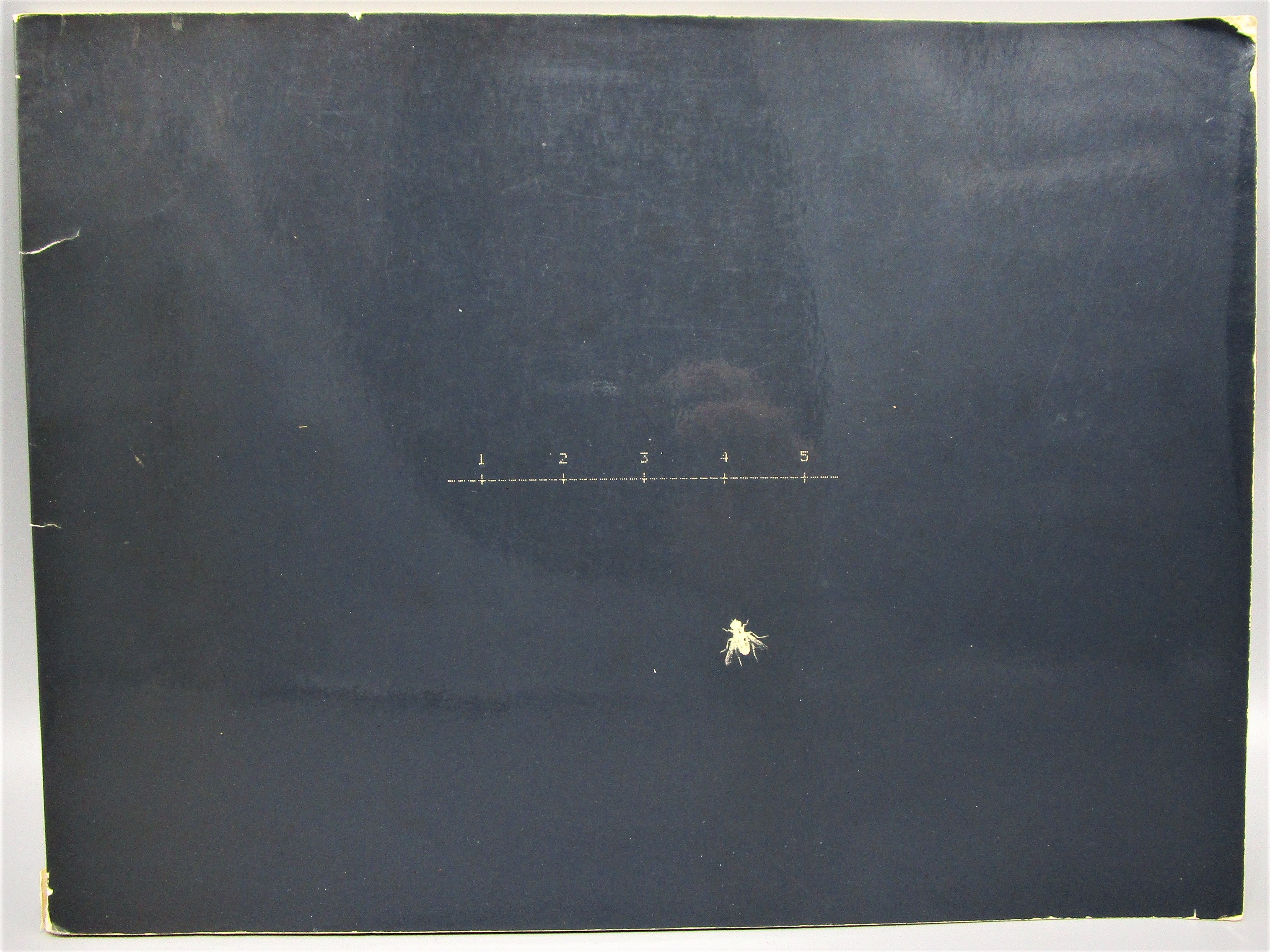 FIREFLIES, by William Larson - 1976 [Signed]