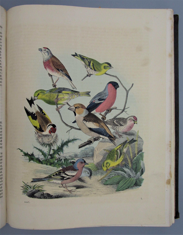 DAS BUCH DER WELT - 1862 [33 Hand-Colored Plates]