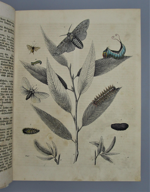 DAS BUCH DER WELT - 1847 [33 Hand-Colored Plates]