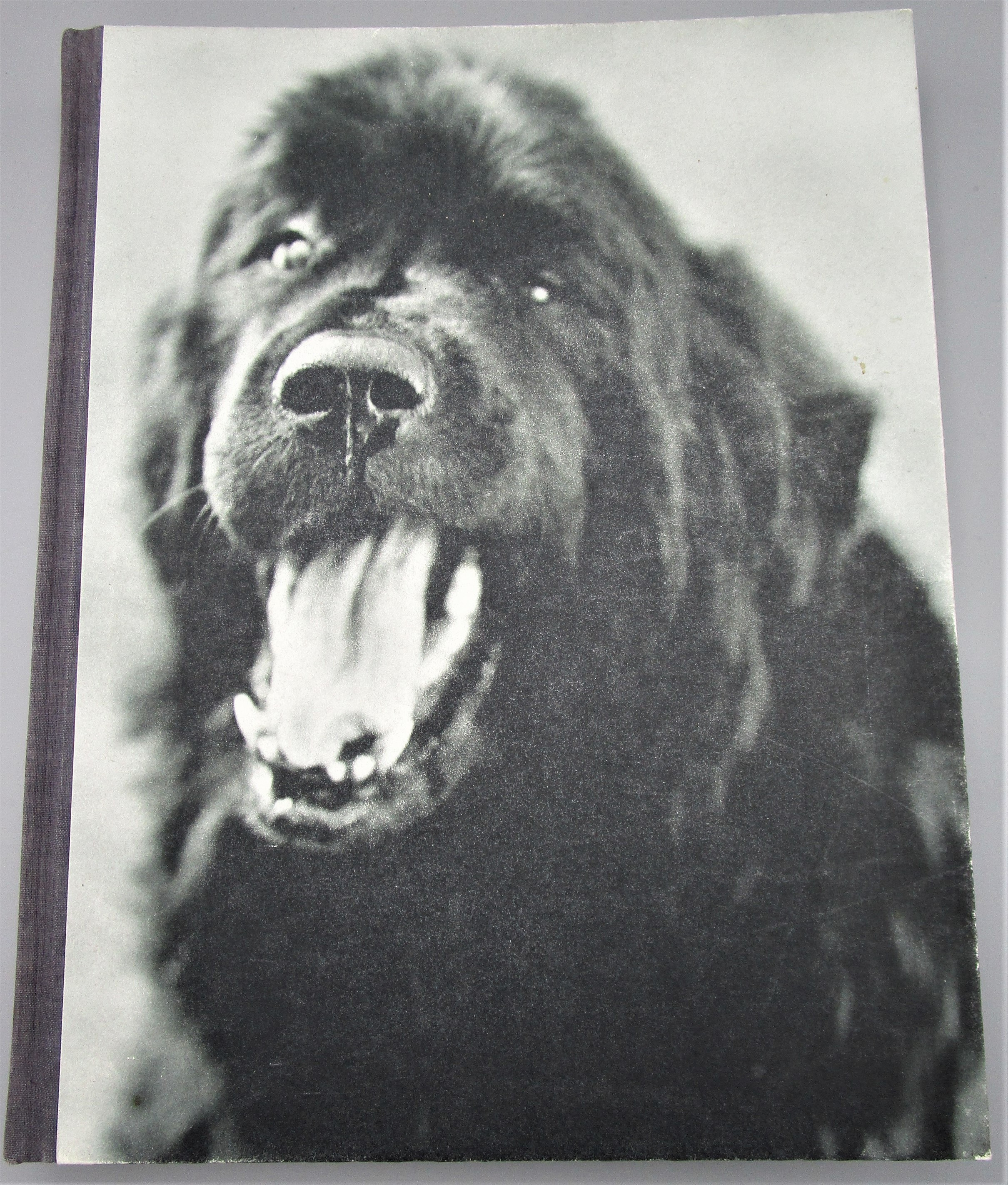 GENTLE GIANTS: A BOOK OF NEWFOUNDLANDS, by Bruce Weber - 1994 1st Edition