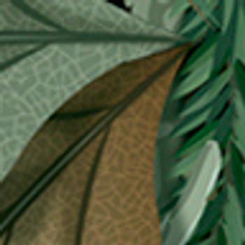 """Fashion Hunter Oak Green 15"""" x 5yd"""