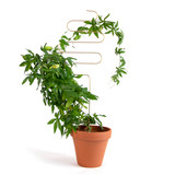 Indoor Plant Stake, Squiggle
