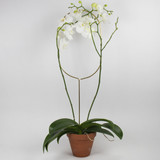 Indoor Plant Stake, Oval