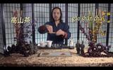 Taiwanese Oolong - Gong Fu Tea|chA's Classroom