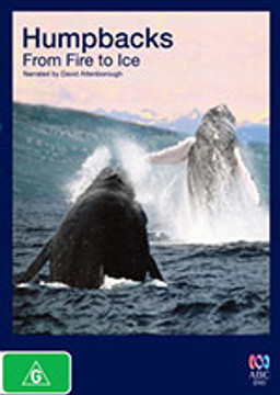 Humpbacks: From Fire to Ice