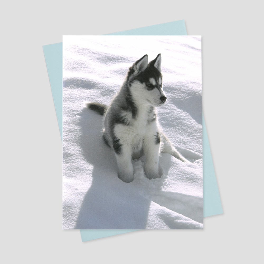 Business Groundhog Day greeting card featuring a husky puppy sitting on a fresh winter day's snow