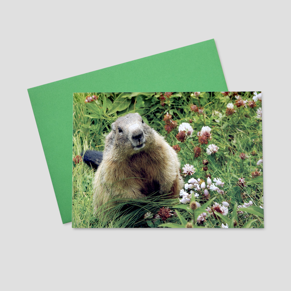 Company Groundhog Day greeting card with a cute groundhog standing up in a field of grass and clovers