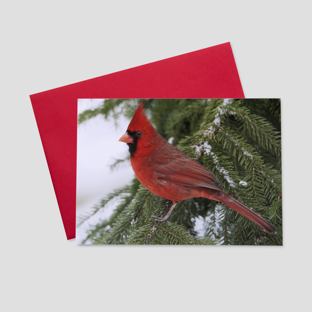 Business Holiday greeting card featuring a red cardinal, the iconic bird of the season, on snowy branches