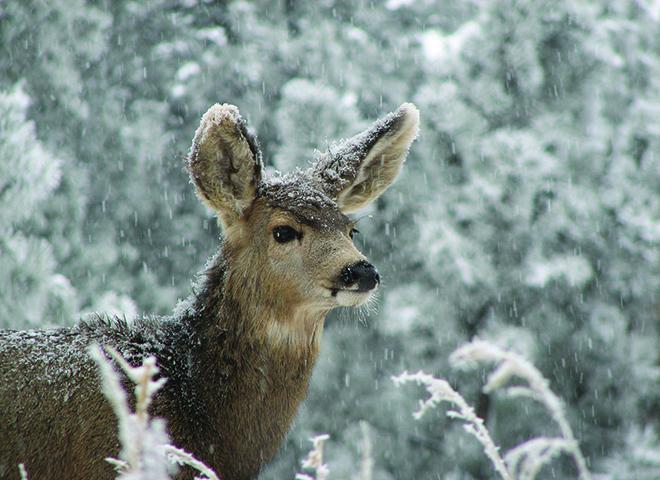 DAD100 - Doe A Deer
