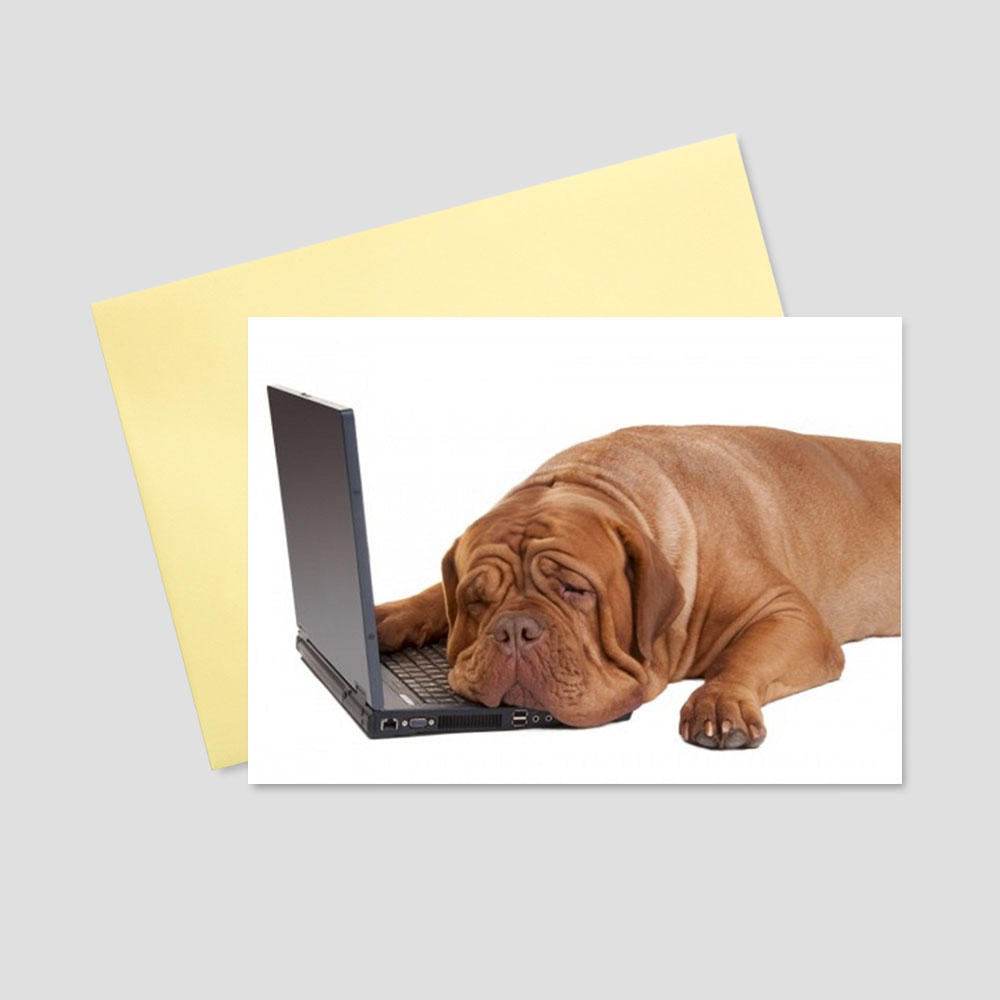 Humorous keep in touch greeting card with a big, floppy dog sleeping on a laptop computer