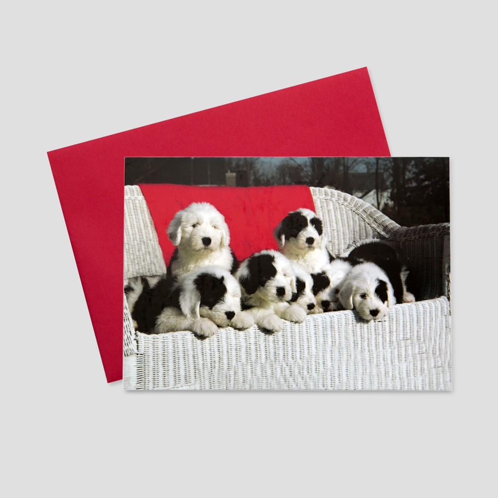 Professional keep in touch greeting card with a group of playful puppies in a white wicker chair
