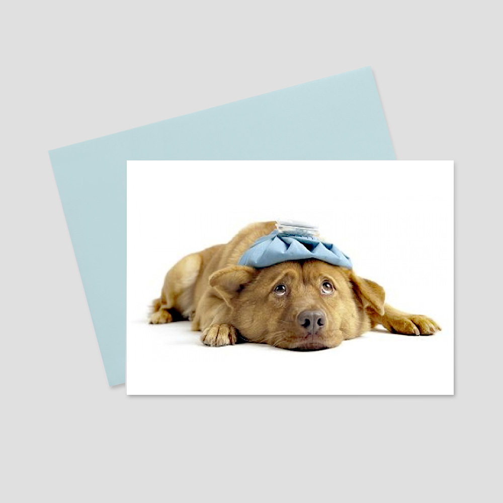 Business keep in touch greeting card featuring a white background and a brown dog looking pitiful with a blue ice pack on his head