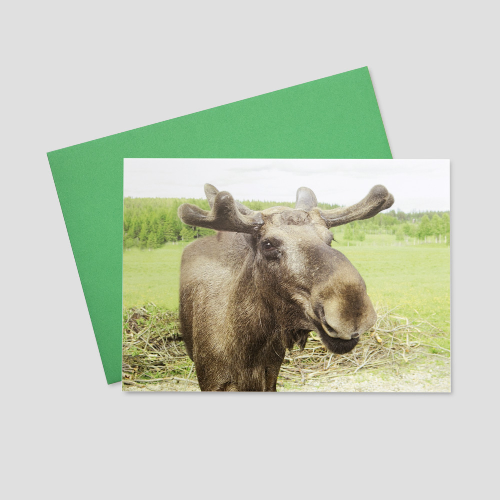 Funny keep in touch greeting card featuring a large moose with antlers in a field of green grass