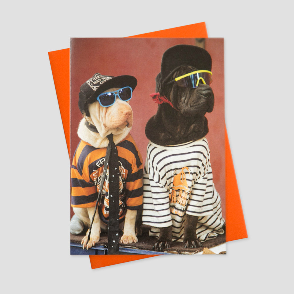 Humorous keep in touch greeting card featuring two dogs dressed incognito in sunglasses and colorful tshirts