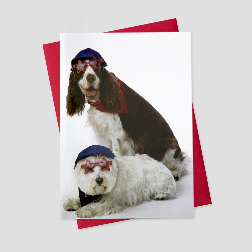 Humorous Patriotic greeting card featuring two dogs dressed in an assortment of patriotic gear