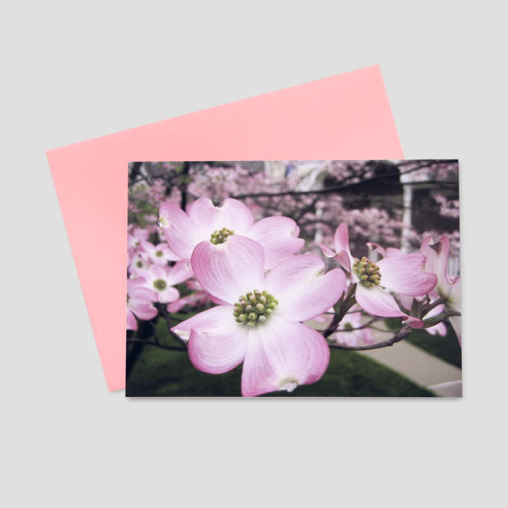 Business Springtime greeting card featuring a close-up view of pink dogwood flowers