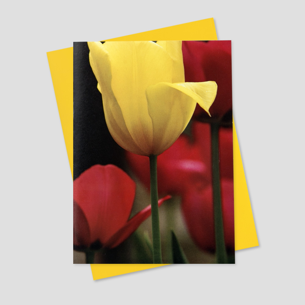 Client Springtime greeting card featuring one yellow tulip amongst a bed of red tulips