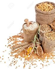 Grains / Shells