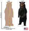 Brown Bear Cardboard Cutout front and back view