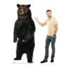 Brown Bear Cardboard Cutout with model