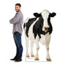 Life-size Cow Cardboard Standup with model for size comparison