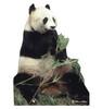 Panda Bear Cardboard Cutout 734